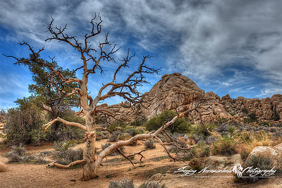National Parks: Sequoia & King Canyon, Death Valley, Joshua Tree, Glacier