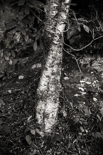 Roots&Rocks4.jpg