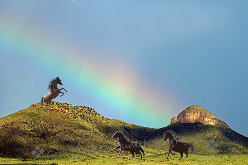 Horses at the Rainbow ~ This beautiful rainbow was photographed in southeast Arizona last August.  Note the green hillsides from summer monsoon rains.  The horses are metal scuptures that I photographed in southern California; I thought they were a nice addition to the landscape with rainbow.