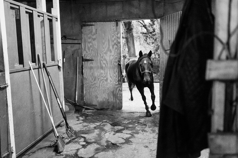 Baltimore -- A horse runs back inside to the warmth on Nov. 9, 2018.