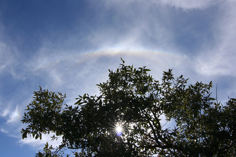 Small rainbow in the Sky with the sun behind the trees