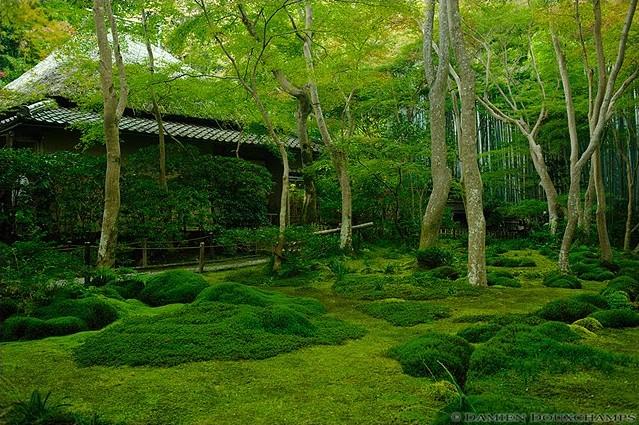 Gio-ji Temple image copyright Damien Douxchamps