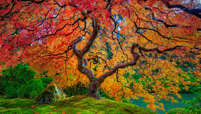 Japanese Garden Oct 2018-125_AuroraHDR2018-edit-Edit.jpg