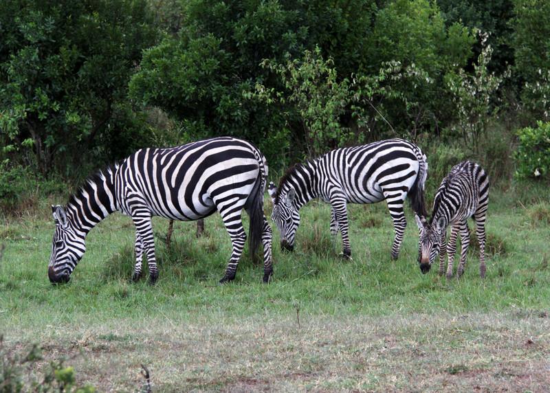 SOUTH LUANGWA - ZAMBIA
