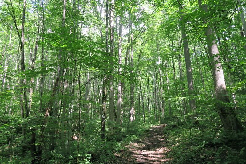Hyatt Ridge Trail - 3,500'