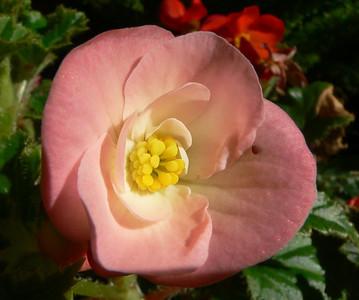 Flowers & Other Macros