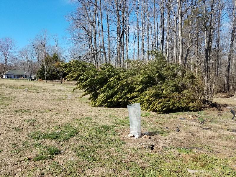 No idea why it fell over a few weeks ago.  Feb 18., 2018.