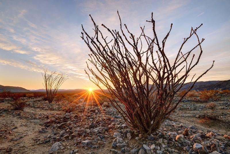 (2016-January 10-12)  Joshua Tree National Park, California.