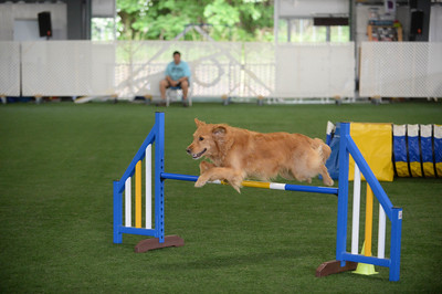 Flexible Flyers USDAA Agility Trial May 30-31