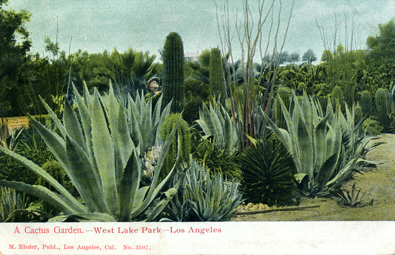 A Cactus Garden in West Lake Park