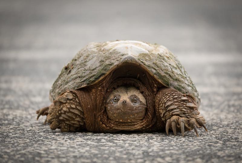 05-21-2020-turtle-3.jpg