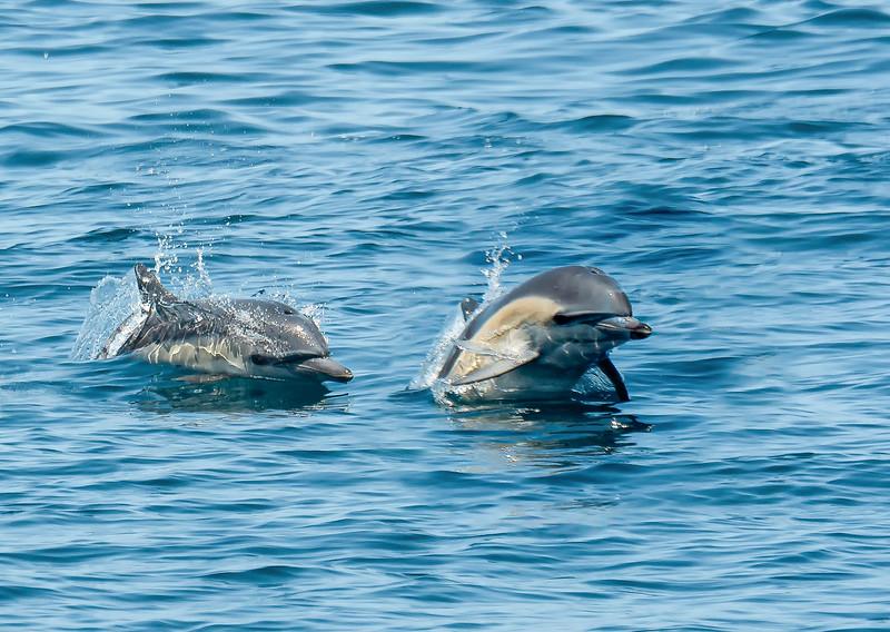 Dolphins 2018-3.jpg