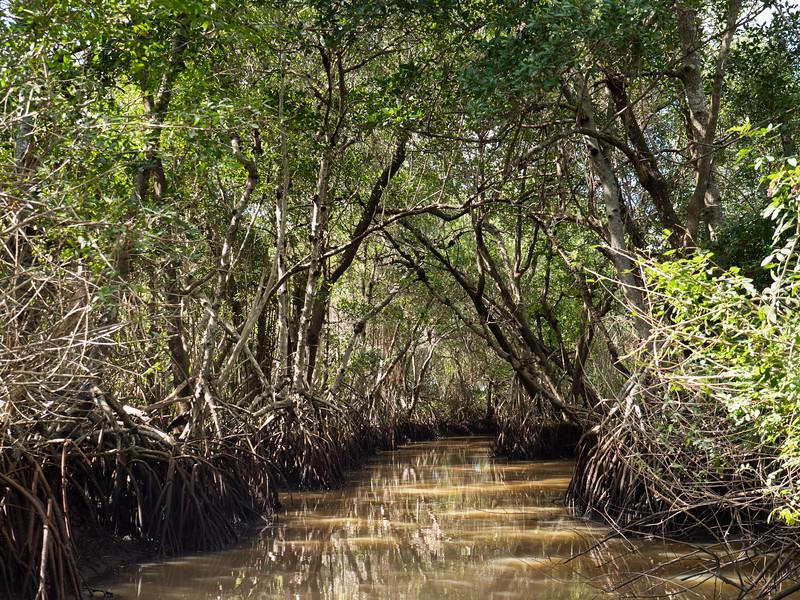 Everglades-55.jpg