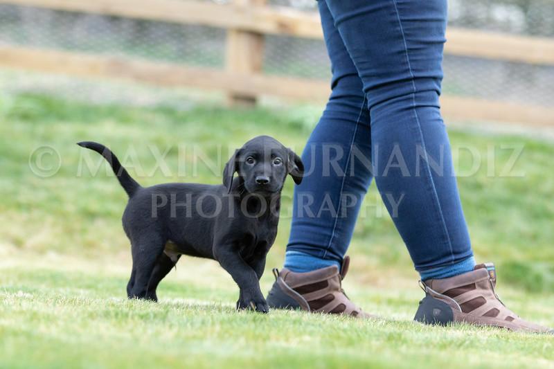 Weika Puppies 24 March 2019-6567.jpg