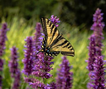 07/13/2016 Bellevue Botanical Gardens