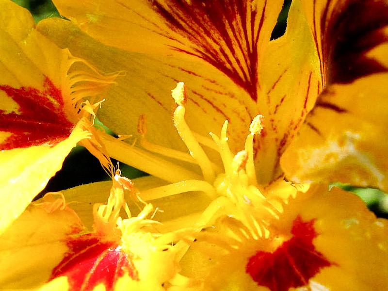 apr12_flower.jpg