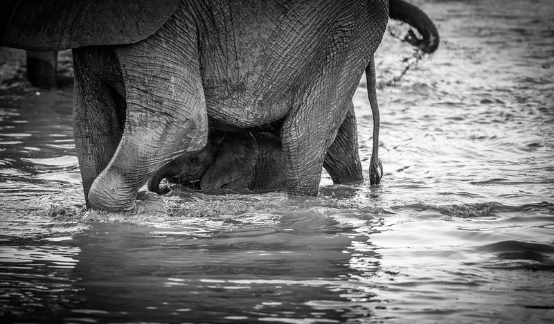 Botswana_June_2017 (4350 of 6179).jpg