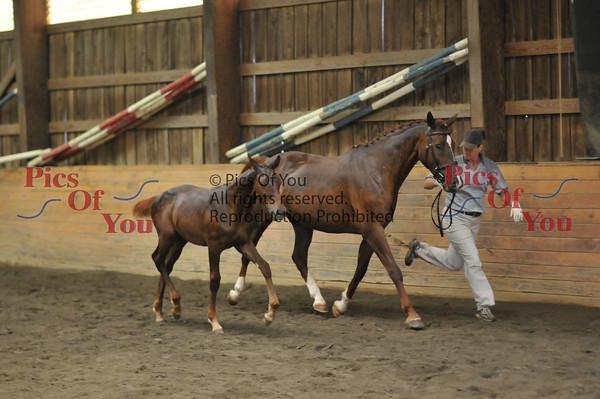Ghlacier 2010 Colt