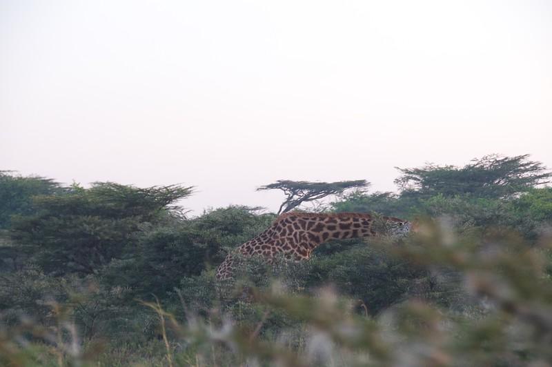 Kenya.Card1.02.2014 518