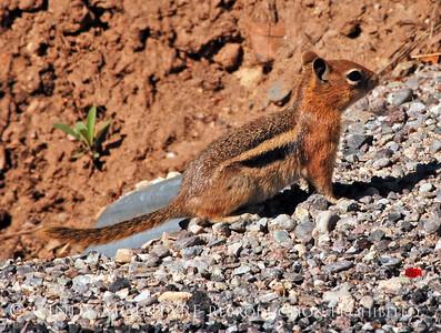 Colorado Critters