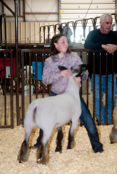 kay_county_showdown_sheep_20191207-110.jpg