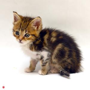 Toni's Kittens 2012