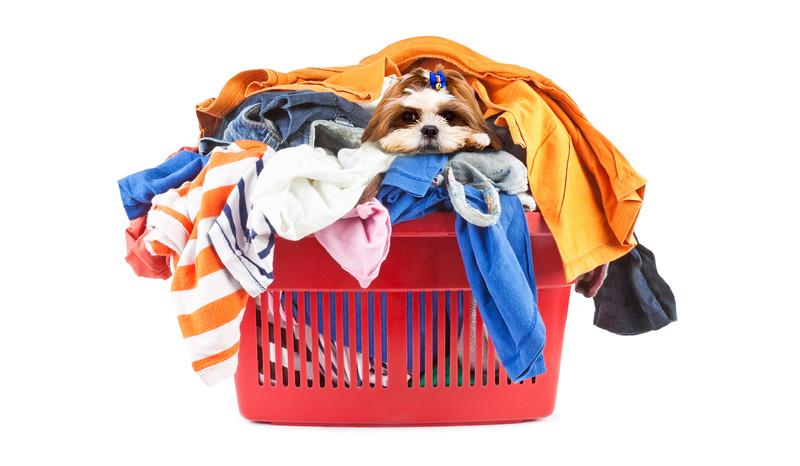 Doglaundry.jpg
