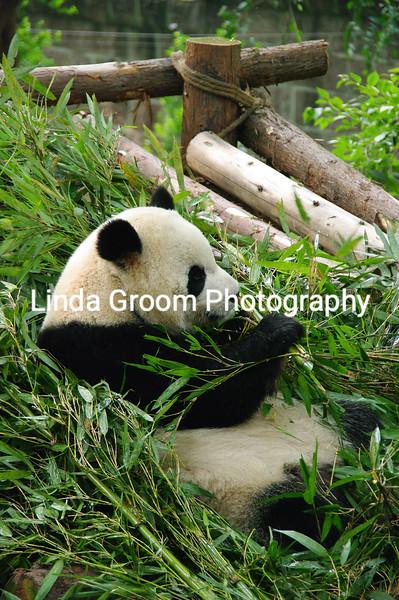 In Bamboo Heaven