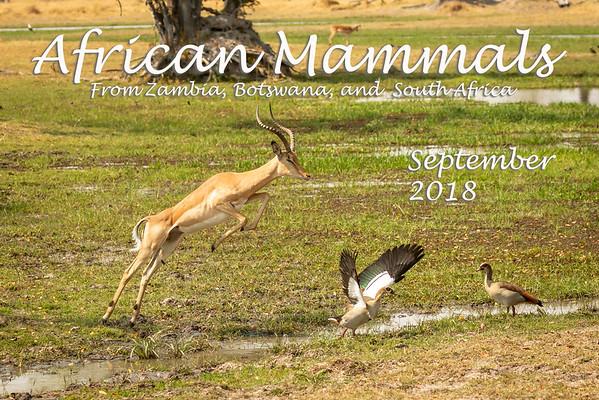 African Mammals 2018