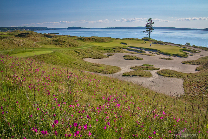 View of Chambers Bay 15th hole and the Lone Fir.