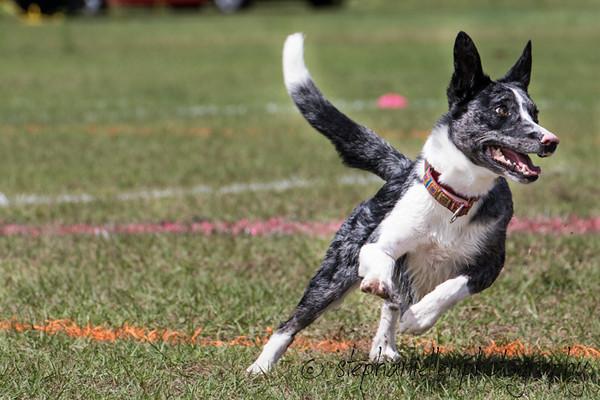 _MG_2885Up_dog_International_2016_StephaniellenPhotography.jpg