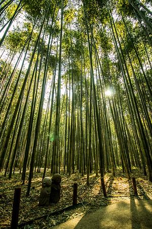 Arashiyama Bamboo Grove, Kyoto
