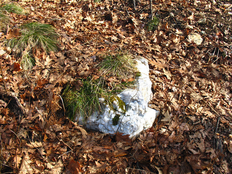 As I gained the ridge I noticed pieces of White Quartz poking through the leaves here and there.