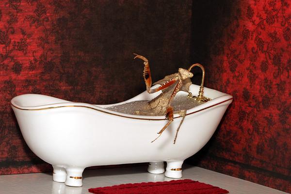 Taking A Bath.jpg