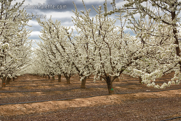 Tulare County Farms in the Spring