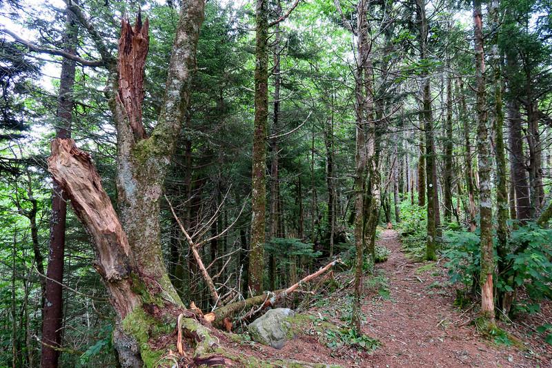 Mountains-to-Sea Trail - 6,030'