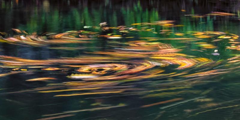 Smoky Mountains_Leaf Trails-2.jpg