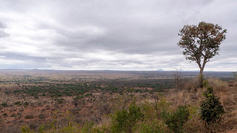 Tanzania-Tarangire-National-Park-Lemala-Mpingo-Ridge-03.jpg