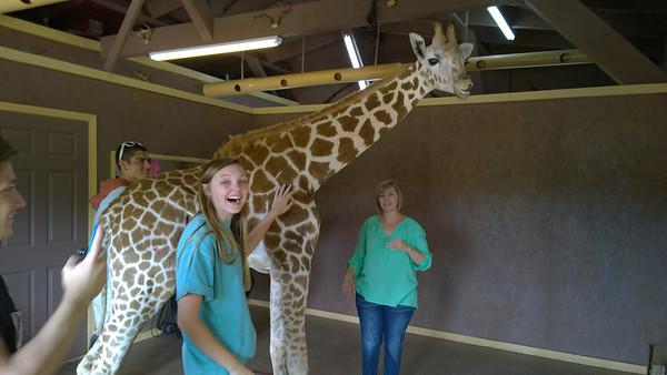 Baby Giraffe Encounter