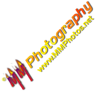 Logos and Watermarks