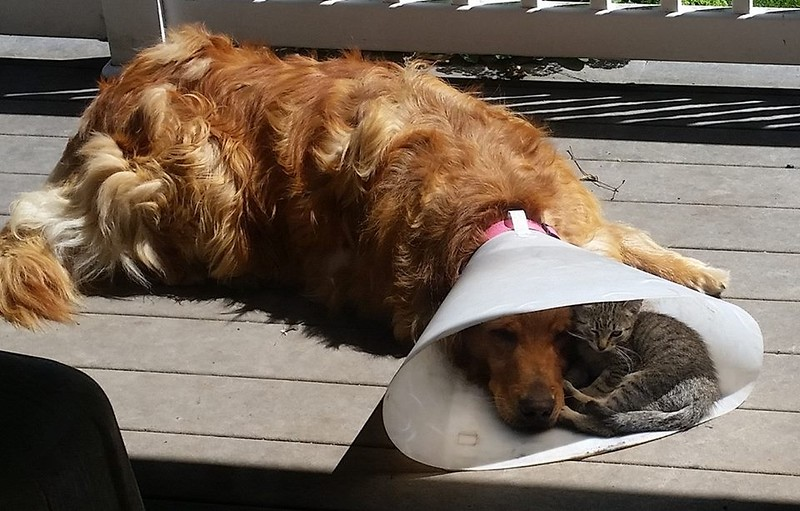 cat in cone.jpg