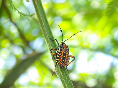 Hemiptera (true bugs, hoppers, aphids)