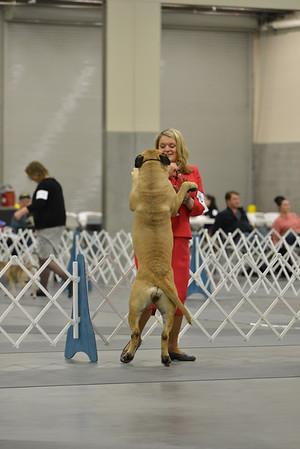 Jill Roman -Bull Mastiff