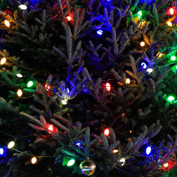 2014 Dec - Harrisburg Christmas Tree Lighting-0512.jpg