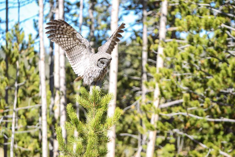 Fall Trip Wyoming & Montana 2016 (103 of 193).jpg