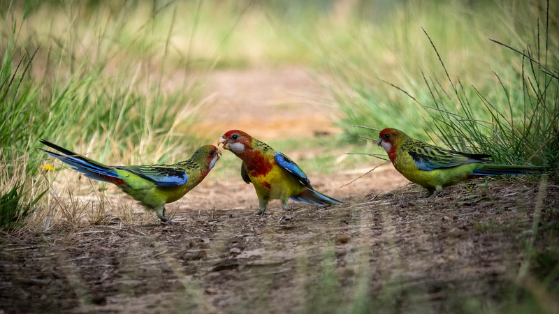 122118  birds  _2.JPG