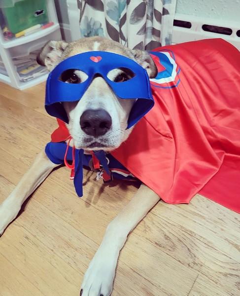 Tammy Jensen_superhero dog.jpg