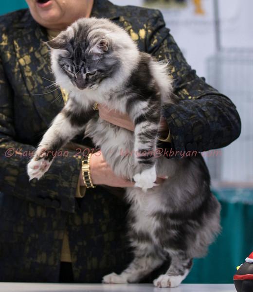 CatShow2014105.JPG