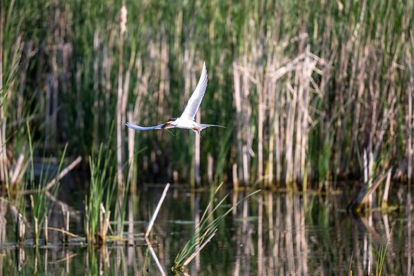 Gull / Tern