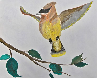 2015 Youth Birding Competition T-shirt Art Contest